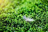 White Feather On Artificial Turf. poster
