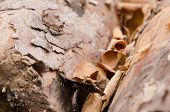 Dry Fallen Leaves Lie On The Felled Tree Trunks. Fallen Foliage Close-up. poster