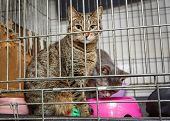 Two Beautiful Cats In A Cage Shelter For Lost Animals poster