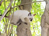 Kittens Are Playing Naughty On A Tree In The Garden. poster