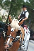 foto of blinders  - A horse with blinders on pulling a carriage - JPG
