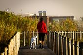 Woman And Dalmatian Dog Walk On Boardwalk Amidst Vegetation. Red Jacket. Back View poster