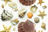 stock photo of crustations  - Seashells sea snails and starfish on a background of white sand - JPG