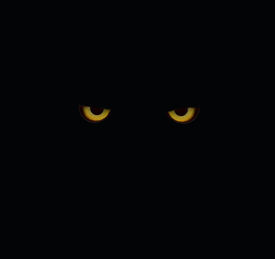 image of owl eyes  - The photo of watching scary eyes looking from the dark - JPG