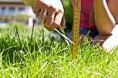 stock photo of fussy  - Woman takes it to mow the lawn fussy - JPG