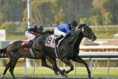 Einstein Wins Million-dollar Santa Anita Handicap