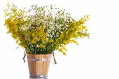 pic of ragweed  - Summer bouquet of wild flowers on a white background - JPG