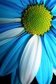 Blue Petals-1 poster