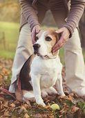 pic of dog-walker  - Senior woman hugs her beagle dog in countryside  - JPG