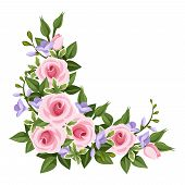 foto of english rose  - Vector corner with pink roses - JPG