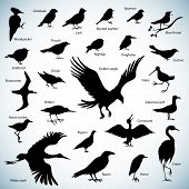 pic of snipe  - Set of birds silhouettes on abstract background - JPG