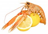 foto of norway lobster  - A single langoustine shellfish with lemons - JPG