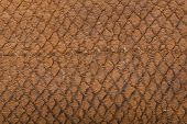 picture of buckskin  - macro detail of brown snake leather, animal skin