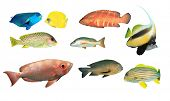 foto of bigeye  - Tropical Reef Fish Collection isolated on white background - JPG