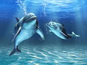 stock photo of bottlenose dolphin  - Two dolphins happily swimming in the ocean - JPG