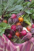 pic of grown up  - Close up of colorful fresh picked raw organic garden beets for sale at a Farmer - JPG