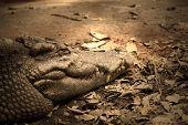 image of leech  - Crocodiles are old leech on the body - JPG