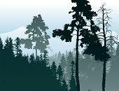 foto of coniferous forest  - Retro - JPG