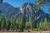 stock photo of redwood forest  - This is a mountain view in Sequoia National Forest in transit to Kings Canyon National Park - JPG
