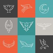 stock photo of eagles  - Vector eagle and falcon linear logo design templates  - JPG