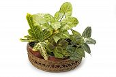 stock photo of crotons  - Syngonium croton and other indoor flowers arranged in basket - JPG