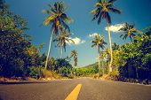 image of tree lined street  - Nice asfalt road with palm trees against the blue sky and cloud - JPG