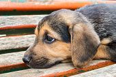 picture of begging dog  - abandoned and sad dog on a seat in a park - JPG