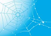 pic of spider web  - Abstract vector background with spider web in dewdrops - JPG