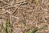 pic of dry grass  - dry withered coastal grass texture for background - JPG