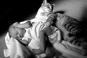 image of newborn baby girl  - newborn baby sleeping next to a cat - JPG