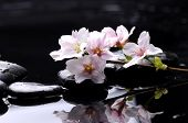 image of cherry-blossom  - therapy stones with Pink cherry blossom sakura - JPG