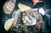Fresh Oysters close-up with knife, served table with oysters. Healthy sea food. Oyster dinner in res poster