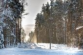 Deforestation, Junction Of Power Lines. Glade For Power Line. Winter Forest After Snowfall. Snow Fal poster