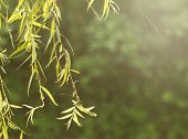 Close Up Tree Branch Under Morning Sunshine Rise , Keep And Calm Feeling Concept poster