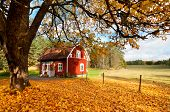 stock photo of quaint  - Picturesque fall background of a quaint traditional red Swedish house amongst a carpet of yellow orange autumn leaves in a peaceful country landscape - JPG