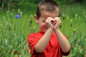 foto of crew cut  - Adorable little boy in orange shirt in flower garden shaping heart with hands to show his mom how much he loves her - JPG