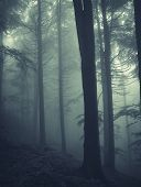 stock photo of coniferous forest  - Dark coniferes forest with thick fog in late autumn - JPG