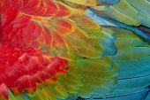 foto of green-winged macaw  - Beautiful texture of Red and green Macaw feathers - JPG