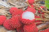 image of laxatives  - wild fruit from forest wild lychee or Nephelium hypoleucum - JPG