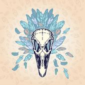 image of ostrich plumage  - Ostrich skull on a plumage background - JPG