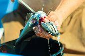 stock photo of animal cruelty  - Fishing  - JPG