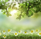 picture of photosynthesis  - natural green background with selective focus - JPG