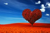 picture of fall day  - Heart shape tree with red leaves on red flower field - JPG