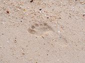 stock photo of footprints sand  - Texture of sand and footprints in the sand  - JPG