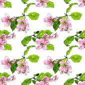 picture of apple blossom  - vector seamless pattern with spring flowers of apple tree - JPG