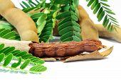 image of tamarind  - Close up of fresh Tamarind Fruit and Food ingredient - JPG