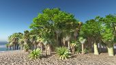 picture of tozeur  - Lush oasis landscape on desert - JPG