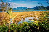 stock photo of marsh grass  - Shallow sea that connects with swamp by the sea with plenty of grass and plants - JPG