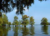 picture of bayou  - Beautiful Cypress trees in the Deep Bayou Country Louisiana USA - JPG