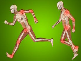 image of male body anatomy  - Concept or conceptual 3D human man or male skeleton pain or ache anatomy transparent body - JPG